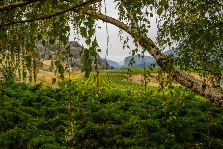 Blue Mountain Winery